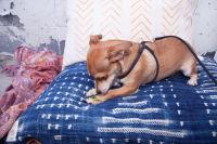 Mowgli Rescue & Rahicali's Furry Friendsgiving at The Butcher's Daughter #45