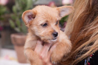 Mowgli Rescue & Rahicali's Furry Friendsgiving at The Butcher's Daughter #69