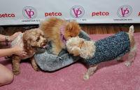 Vanderpump Pets launch event #21