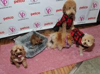 Vanderpump Pets launch event #25