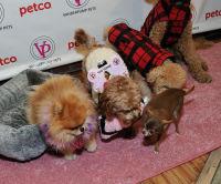 Vanderpump Pets launch event #30
