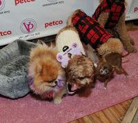 Vanderpump Pets launch event #31