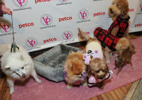 Vanderpump Pets launch event #32