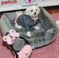Vanderpump Pets launch event #53