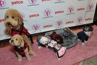 Vanderpump Pets launch event #60