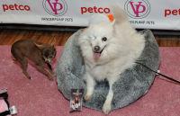 Vanderpump Pets launch event #69