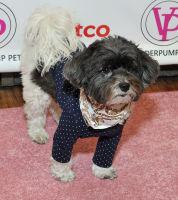 Vanderpump Pets launch event #88
