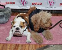 Vanderpump Pets launch event #103