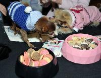 Vanderpump Pets launch event #117