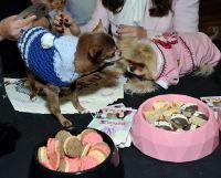 Vanderpump Pets launch event #118