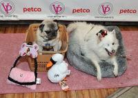 Vanderpump Pets launch event #127