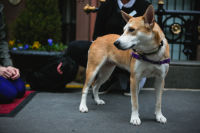 10th Annual Animal Care Spring Fling  #6