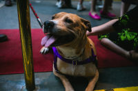 10th Annual Animal Care Spring Fling  #8