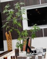 The Greenleaf Cannabis Laboratory Party #156