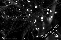 Pike & Rose Christmas Tree Lighting #60