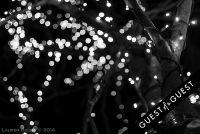 Pike & Rose Christmas Tree Lighting #61