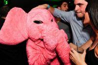 Pink Elephant 27 June #100