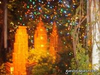 Botanical Gardens Winter Ball #33