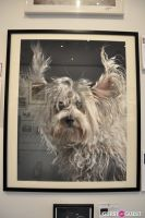 Humane Society of New York's Third Benefit Photography Auction #12