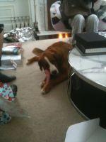 Kona the Dog #6