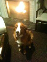 Kona the Dog #7