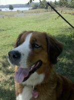 Kona the Dog #10
