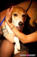 Beth Ostrosky Stern and Pacha NYC's 5th Anniversary Celebration To Support North Shore Animal League America #100