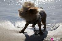 Polar Bear Swim 2012 #36