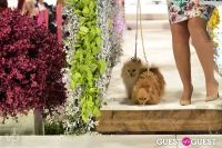 Fashion For Paws 2012 II #72