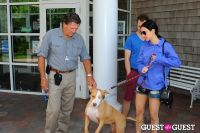 Jean Shafiroff and Dog Trainer Bill Grimmer Visit Southampton Animal Shelter #59