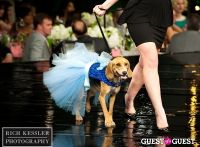 Fashion for Paws 2013 #1