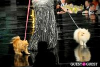 Fashion for Paws 2013 II #107