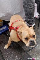MidCity Dog Days Festival #14