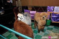 The Alpaca Project Celebration #122