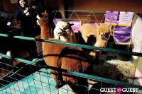 The Alpaca Project Celebration #124