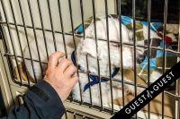 Animal Care Spring Fling #43