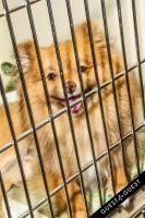 Animal Care Spring Fling #45