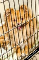 Animal Care Spring Fling #47