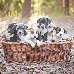 15 Adorable Puppy GIFs To Appreciate On National Puppy Day