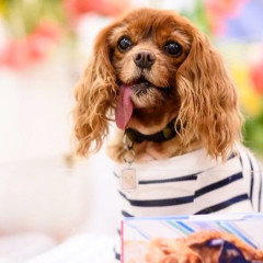 Instagram Famous Pup Toast Meets World Has Passed Away