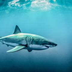 You NEED To Visit The New York Aquarium's New Shark Exhibit