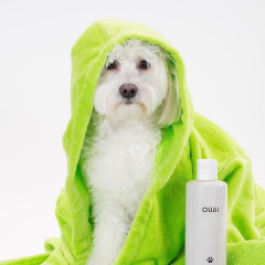 Celebrity Haircare Fave OUAI Is Launching Luxury Shampoo For Your Pooch