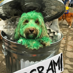 Just 10 Adorable NYC Dogs Dressed Up For Halloween