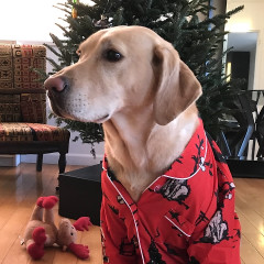 These Christmas Pajamas Are The Merriest Loungewear Around