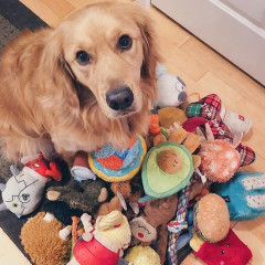 #KonMariPets Is The Cutest Cleaning Trend On Instagram