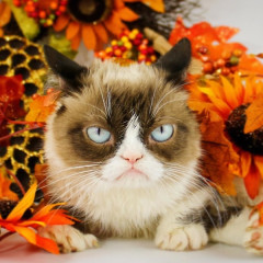 RIP Grumpy Cat: A Look Back At Her Best Memes