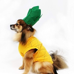 Very Important Question: What Should Your Pet Be For Halloween?