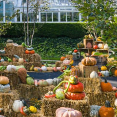 New York Botanical Garden's Great Pumpkin Path