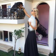 Of Course Paris Hilton Just Bought Her Pup A $5,500 Hermès Bag