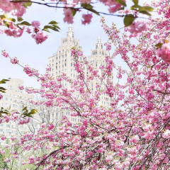 The Most Insta-Worthy Spots To See Cherry Blossoms In NYC